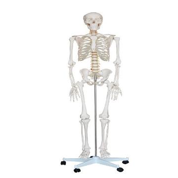 Imagen de Esqueleto de Tamaño Natural de 180 cm