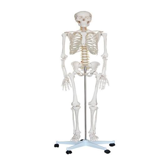 Esqueleto de Tamaño Natural de 180 cm